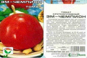 Описание томата Эм Чемпион, выращивание своими руками и борьба с вредителями