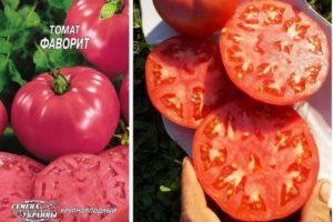 Описание гибридного сорта томата Фаворит и выращивание растения на участке