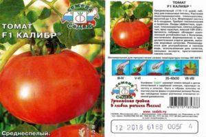 Описание крупноплодного гибрида томатов Главный калибр F1 и рекомендации по выращиванию