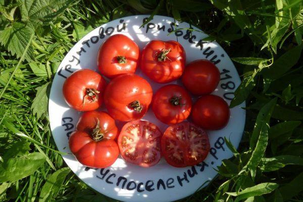 Тарелка с помидорами