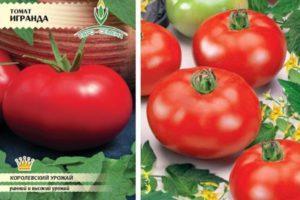 Характеристика высокоурожайного томата Игранда и описание сорта