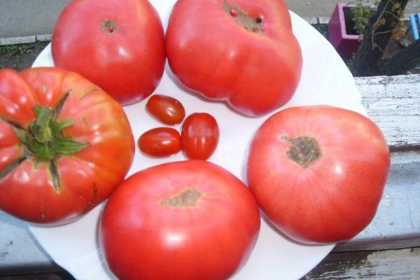 Малиновые томаты
