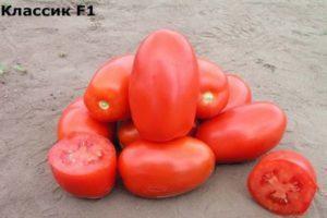 Характеристика и описание томата Классик F1, рекомендации по выращиванию сорта