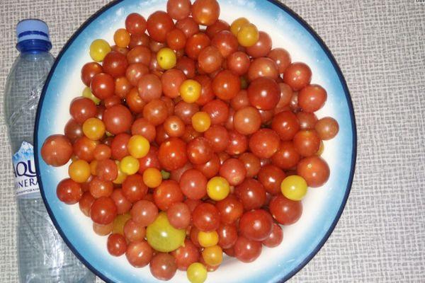 Плоды помидора