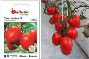 Описание гибридного томата Колибри и выращивание сорта рассадным методом