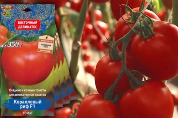 Раннеспелые томаты