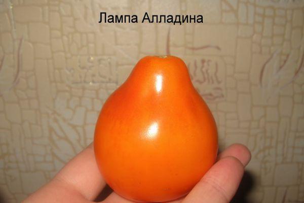 Помидор Лампочка