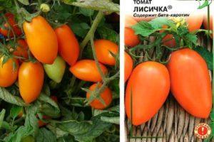 Описание детерминантного сорта томата Лисичка и агротехника выращивания