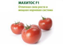 Описание гибридного сорта томатов Махитос F1 и выращивание рассады