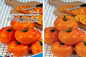 Описание низкорослого томата Мармеладный и выращивание сорта в открытом грунте