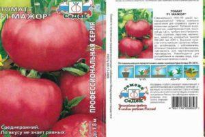 Описание томата Мажор F1, выращивание рассадным методом и уход за гибридом