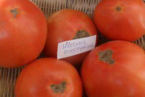 Характеристика гибридного сорта томата Мечта огородника и агротехника выращивания