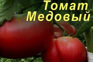 Описание розового томата Медовый и условия выращивания сорта в тепличных условиях