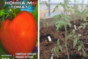 Описание гибридного томата Нонна М, выращивание рассады и уход