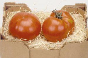 Описание томата Нужный размер и выращивание гибридного сорта своими руками