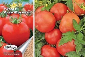 Характеристика томата Огни Москвы и особенности выращивания сорта