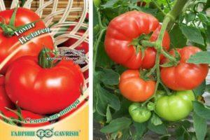 Характеристика томата Пелагея и важные советы по выращиванию сорта