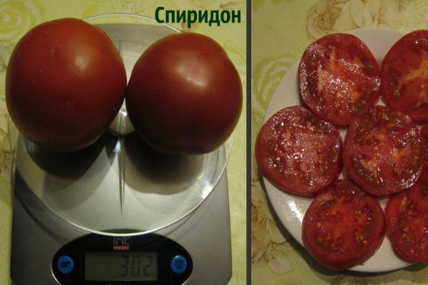 Вес помидора