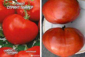 Характеристика томата Спринт таймер и правила выращивания сорта рассадным способом