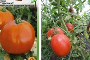 Описание необычного сорта томата Сумочка и технические данные растения