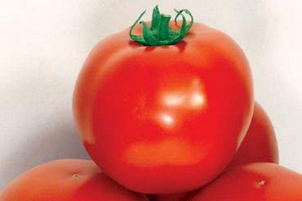 Красный помидор