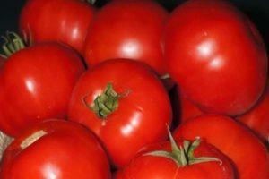 Описание гибридного томата Tmag 666 f1 и выращивание в открытом грунте