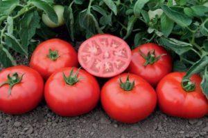 Характеристика блестящего томата Томск f1 и особенности выращивания гибрида