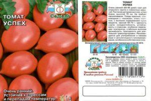 Характеристика и описание томата Успех, выращивание сорта из семян