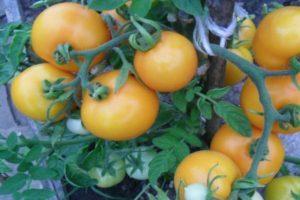 Описание лечебного сорта томата Утенок, выращивание растения в открытом грунте и в теплицах