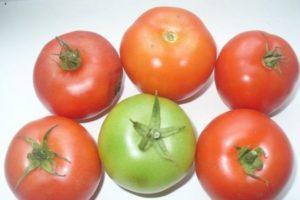 Характеристика и описание томата Увертюра, выращивание помидоров в открытом грунте и теплице