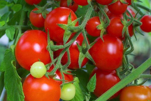 Кисть с помидорами