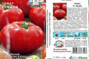 Описание гибридного томата Валя f1 и особенности выращивания сорта