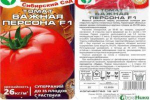 Характеристика гибридного морозостойкого томата Важная персона и выращивание рассадным способом