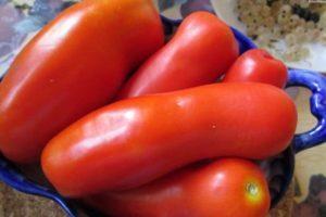 Описание селекционного томата сорта Жигало и правила выращивания гибрида