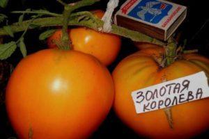 Описание томата Золотая королева и технические данные растения