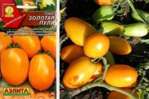 Характеристика и описание томата Золотая пуля, советы и отзывы о сорте