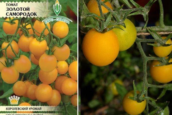Золотистые томаты
