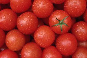 Разновидности томатов кировской селекции для выращивания в теплице и открытом грунте