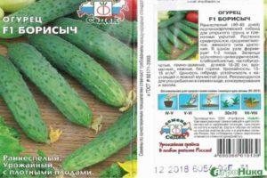 Описание огурца Борисыч F1, выращивание рассады и уход за гибридом