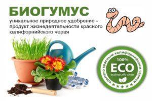 Применение удобрения Биогумус для подкормки огурцов