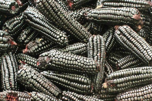 Черные плоды