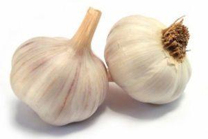 Описание чеснока сорта Парус, правила выращивания и советы по уходу