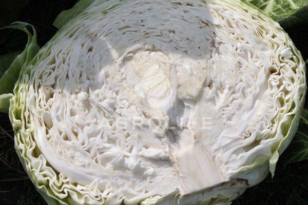 Разрезанная капуста