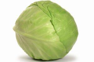 Описание белокочанной капусты Слава, выращивание и борьба с вредителями