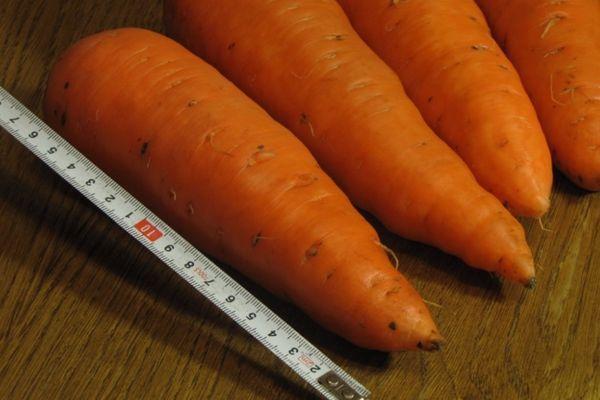 Гибридная морковка