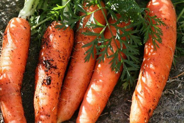 Плоды морковки