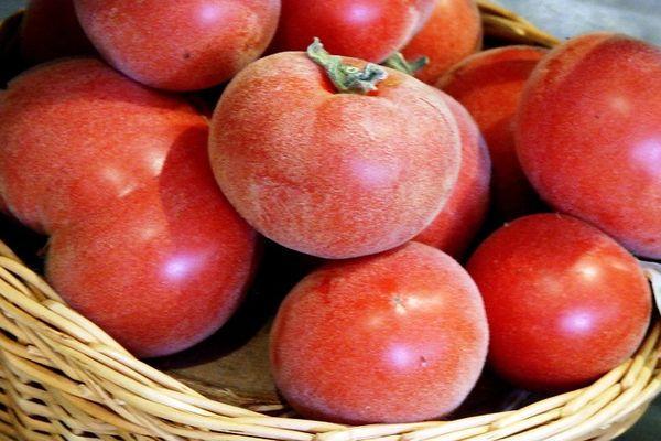 Бархатистые томаты