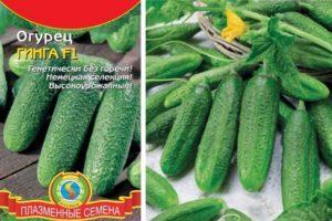 Описание гибридного огурца Гинга f1 и выращивание культуры рассадным способом