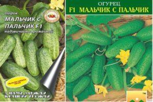 Описание гибридных огурцов Мальчик-с-пальчик и правила выращивания сорта