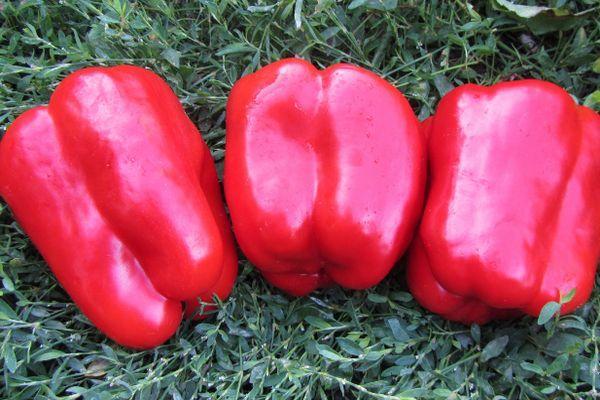 Красные перцы